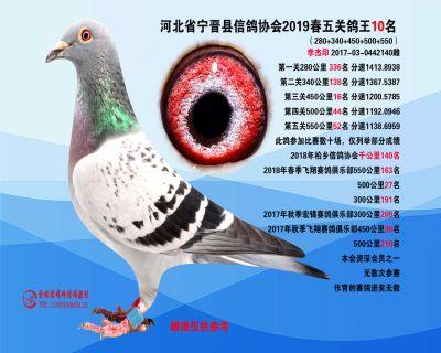 2019年春季五关鸽王10名