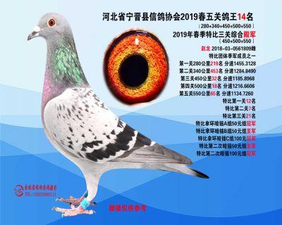 2019年春季五关鸽王14名