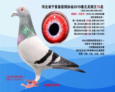2019年春季五关鸽王15名