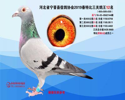 2019年春特比三关鸽王12名