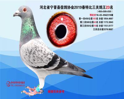 2019年春特比三关鸽王23名