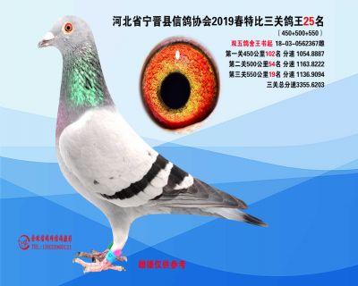 2019年春特比三关鸽王25名