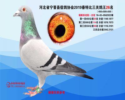 2019年春特比三关鸽王26名