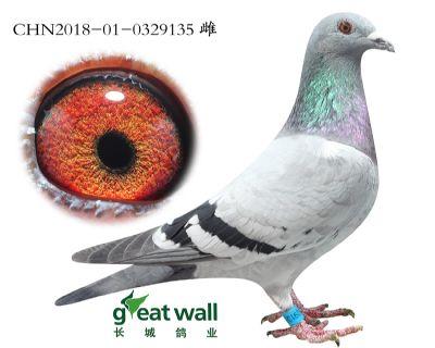 20.鲁道血系.0329135