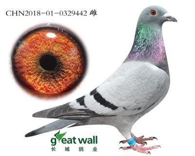 2.速霸龙血系.0329442