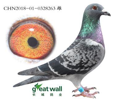 3.三鸽王孙代.0328263