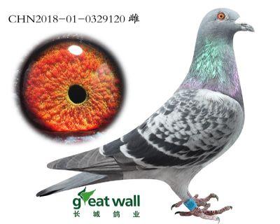 5.鲁道血系.0329120