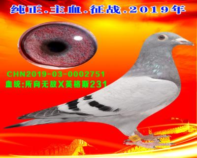 22号拍卖鸽