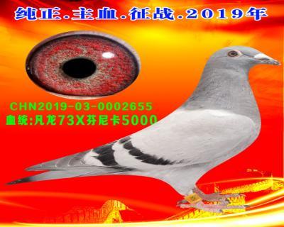 23号拍卖鸽