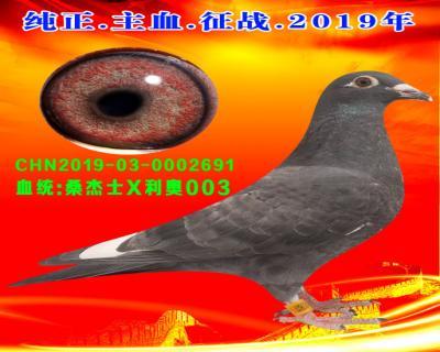 43号拍卖鸽