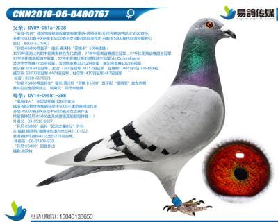 福洛-超级芬妮卡767