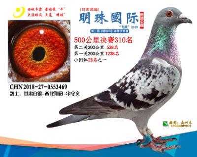 2019武威明珠310