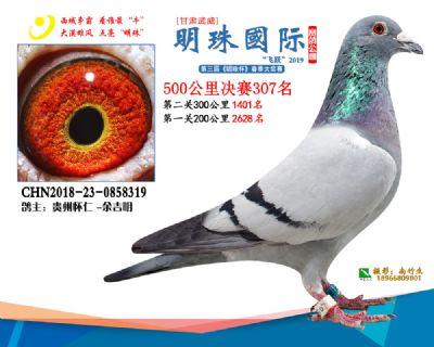 2019武威明珠307