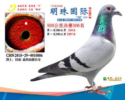 2019武威明珠306