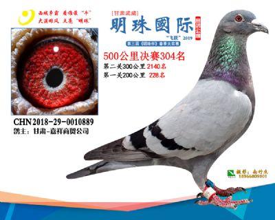 2019武威明珠304
