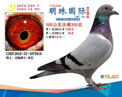 2019武威明珠305