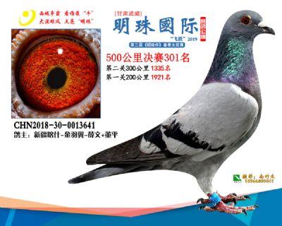 2019武威明珠301