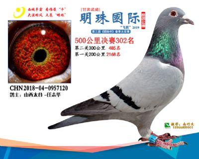 2019武威明珠302