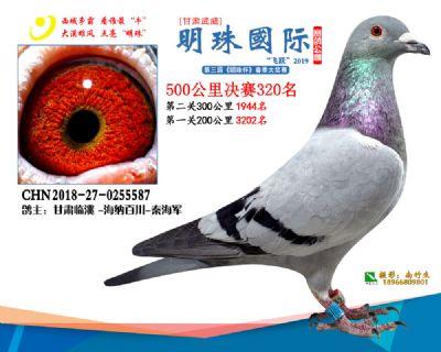 2019武威明珠320