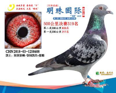 2019武威明珠319