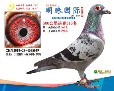 2019武威明珠316