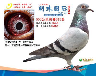 2019武威明珠315