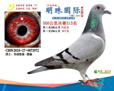 2019武威明珠313