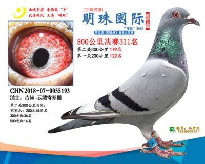 2019武威明珠311