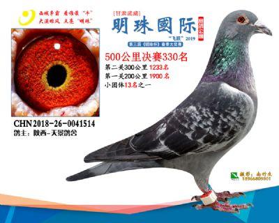 2019武威明珠330