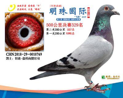 2019武威明珠329
