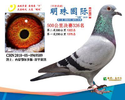 2019武威明珠326