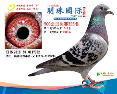 2019武威明珠325