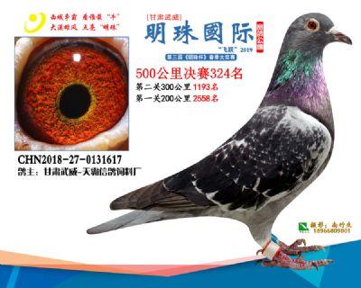 2019武威明珠324