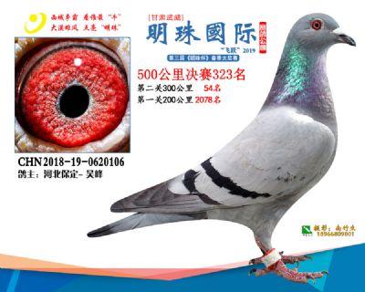 2019武威明珠323