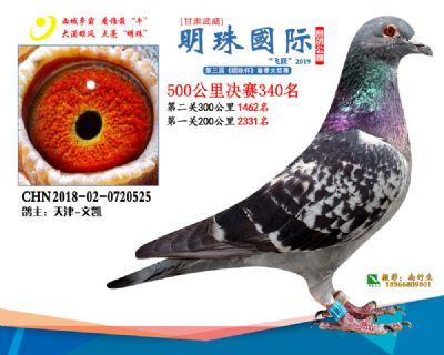 2019武威明珠340
