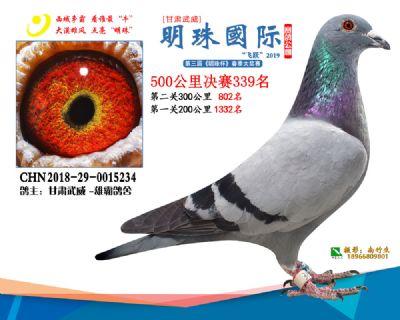 2019武威明珠339