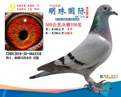 2019武威明珠338