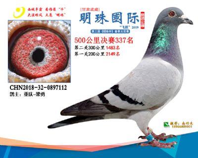 2019武威明珠337
