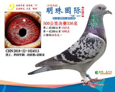 2019武威明珠336