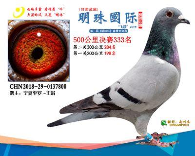 2019武威明珠333