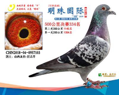 2019武威明珠334