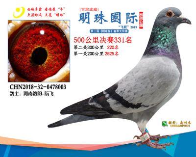 2019武威明珠331