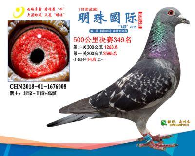 2019武威明珠349