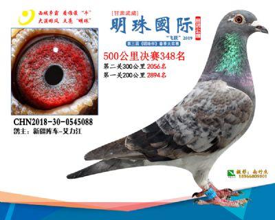 2019武威明珠348