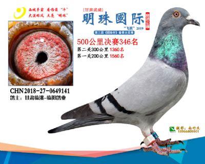 2019武威明珠346