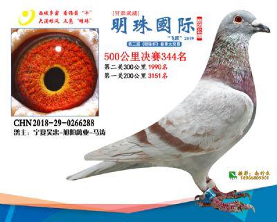 2019武威明珠344