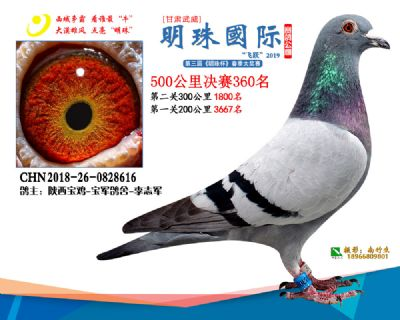 2019武威明珠360