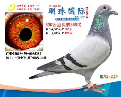 2019武威明珠359