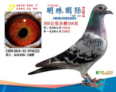 2019武威明珠358