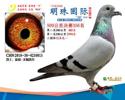 2019武威明珠356